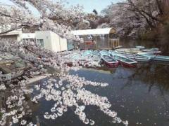 野村佑香 公式ブログ/4月11日 画像3