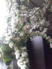 野村佑香 公式ブログ/中日 画像1