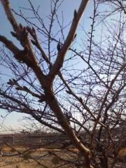 野村佑香 公式ブログ/春への蓄え 画像1