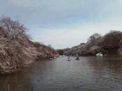 野村佑香 公式ブログ/4月11日 画像2