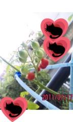 新垣桃菜(JK21) 公式ブログ/桃菜よりもちっちゃいトマト(´3`) 画像1