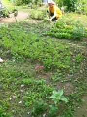 オルリコ 公式ブログ/家庭栽培 画像1
