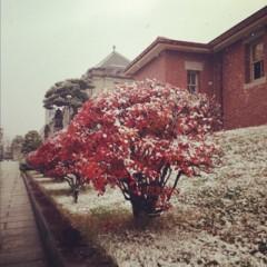 カトウトモタカ 公式ブログ/12月に入ったら一気に真冬感が出ましたね。こないだまで夏だった気がするのに。 画像1