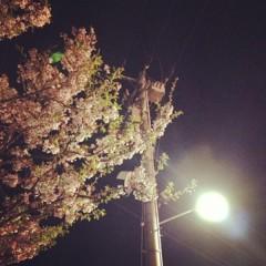 カトウトモタカ 公式ブログ/今くらいの葉桜が満開と同じくらい好きです。 画像1