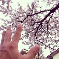カトウトモタカ 公式ブログ/本来「花より団子」な俺ですけど、今年は純粋に花を見る花見をしたい、そんな気分です。 画像1