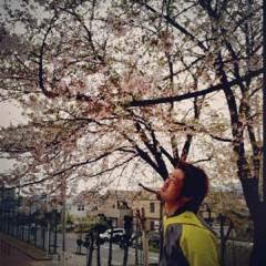 カトウトモタカ 公式ブログ/桜の木を見ながらもいいけど、桜の木の下でお酒を呑みたいです。 画像1
