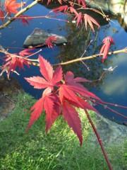 かおる 公式ブログ/綺麗な季節 画像1