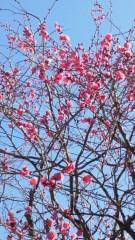 沢田美香 公式ブログ/春がきたかな? 画像1