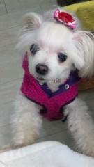 沢田美香 公式ブログ/春をイメージして 画像2
