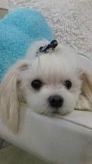 沢田美香 公式ブログ/希望は…ホワイト♪ 画像2