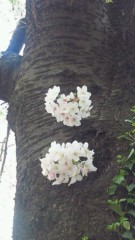 沢田美香 公式ブログ/春らしい一日だったね 画像3