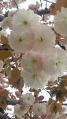 沢田美香 公式ブログ/花よりだんご♪♪♪ 画像2