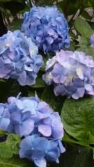 沢田美香 公式ブログ/おはようございまーす! 画像1