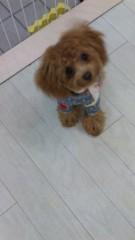 沢田美香 公式ブログ/ネイルテーマは 画像1
