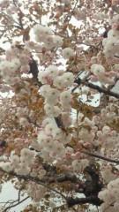 沢田美香 公式ブログ/花よりだんご♪♪♪ 画像1