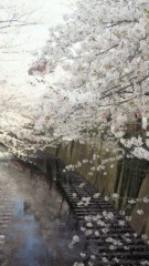 沢田美香 公式ブログ/桜満開 画像3