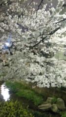 沢田美香 公式ブログ/夜桜☆ 画像1