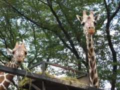 篠崎菜穂子 公式ブログ/羽村市動物公園 画像2