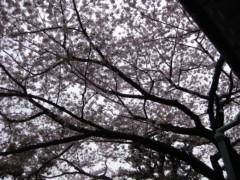 篠崎菜穂子 公式ブログ/さくら、さくら 画像2