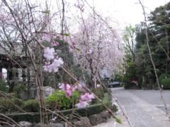 篠崎菜穂子 公式ブログ/さくら、さくら 画像1