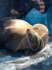 神崎翔 公式ブログ/上野動物園その4 画像1