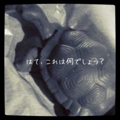 佐々木友里 公式ブログ/亀子さん登場。 画像1