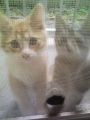 オトナモード 公式ブログ/猫7。 画像1