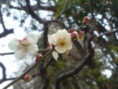 オトナモード 公式ブログ/春 画像1