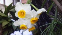 オトナモード 公式ブログ/春の日曜の午後に響き合い 画像1