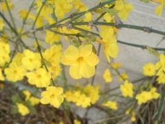 オトナモード 公式ブログ/春さき 画像2