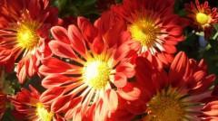 オトナモード 公式ブログ/花屋になる 画像1