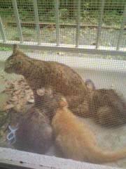 オトナモード 公式ブログ/猫4。 画像1