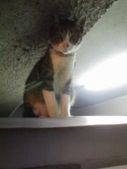 オトナモード 公式ブログ/猫17。 画像1