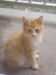 オトナモード 公式ブログ/猫8 画像1
