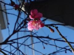 オトナモード 公式ブログ/芽吹く 画像1