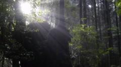オトナモード 公式ブログ/縄文杉へ朝の森 画像1