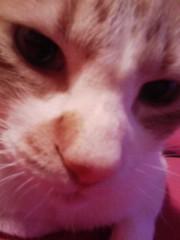 オトナモード 公式ブログ/猫13。 画像1