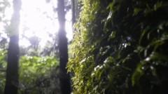 オトナモード 公式ブログ/縄文杉へ朝の森 画像3