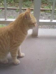 オトナモード 公式ブログ/猫。 画像1