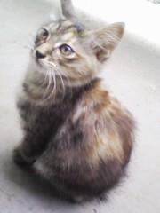 オトナモード 公式ブログ/猫6 画像1
