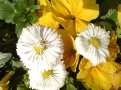 オトナモード 公式ブログ/春らしい日差しの3/5 画像1