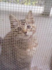 オトナモード 公式ブログ/猫10。 画像1