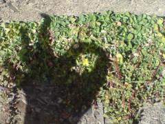 オトナモード 公式ブログ/春さき 画像1