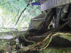 オトナモード 公式ブログ/登山道 画像2
