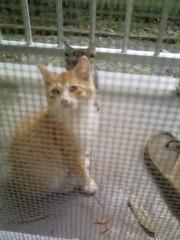 オトナモード 公式ブログ/猫11。 画像1