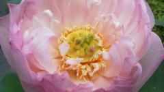 オトナモード 公式ブログ/花の舞台 画像1