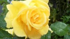 オトナモード 公式ブログ/花屋になる 画像2