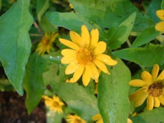 オトナモード 公式ブログ/花屋の守り神 画像2
