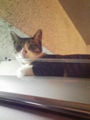 オトナモード 公式ブログ/猫16。 画像1