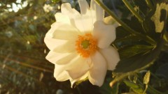 オトナモード 公式ブログ/おはよう 画像1